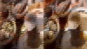 Кофе с мускатным орехом - рецепты и приготовление