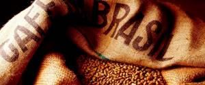 Виды и сорта бразильского кофе